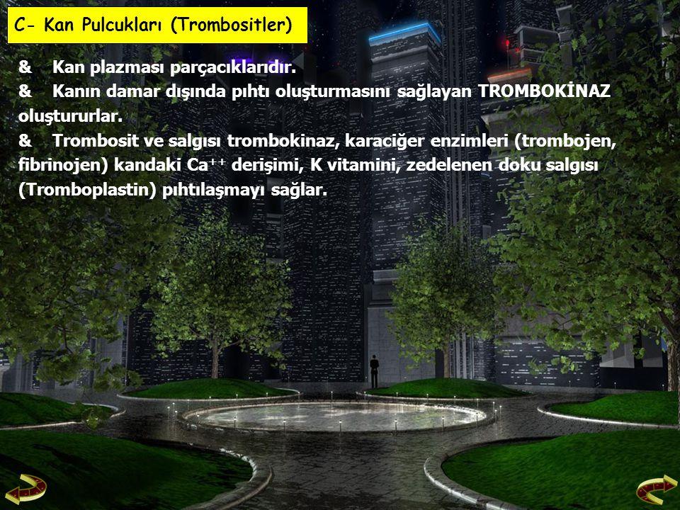 C- Kan Pulcukları (Trombositler)