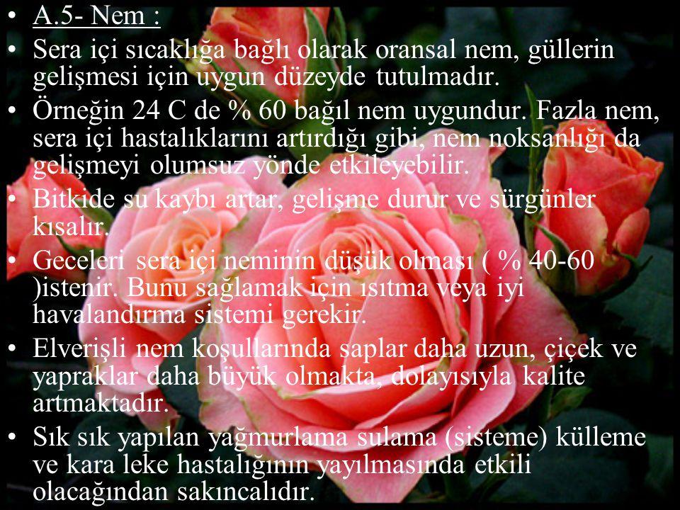 A.5- Nem : Sera içi sıcaklığa bağlı olarak oransal nem, güllerin gelişmesi için uygun düzeyde tutulmadır.