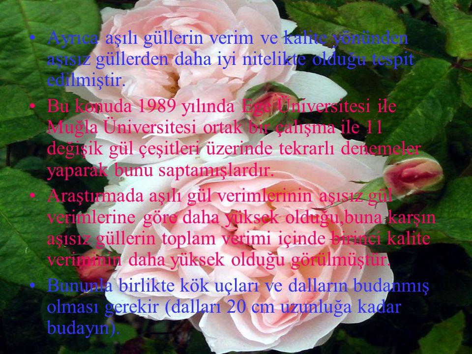 Ayrıca aşılı güllerin verim ve kalite yönünden aşısız güllerden daha iyi nitelikte olduğu tespit edilmiştir.
