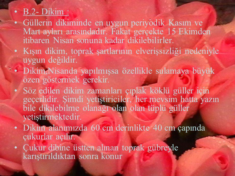 B.2- Dikim :