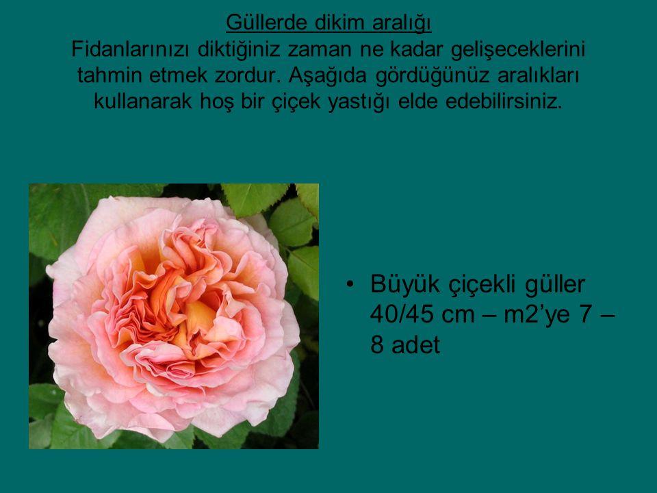 Büyük çiçekli güller 40/45 cm – m2'ye 7 – 8 adet