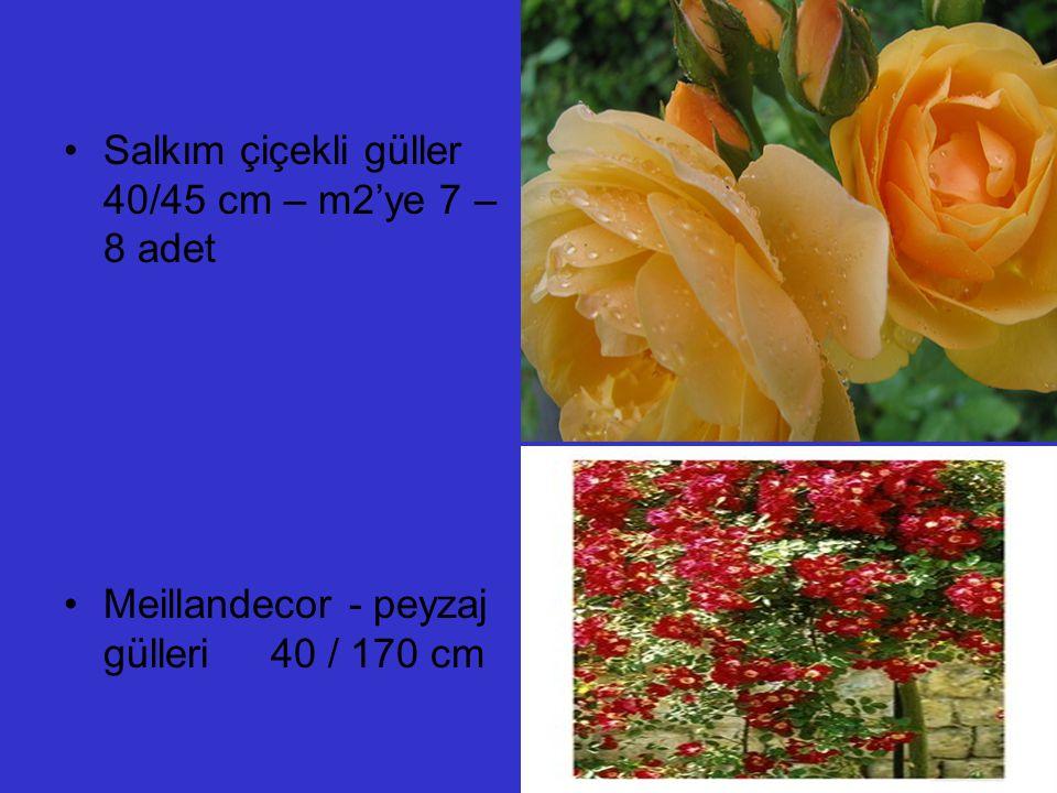 Salkım çiçekli güller 40/45 cm – m2'ye 7 – 8 adet