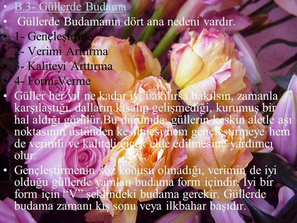 B.3- Güllerde Budama Güllerde Budamanın dört ana nedeni vardır. 1- Gençleştirme. 2- Verimi Arttırma.