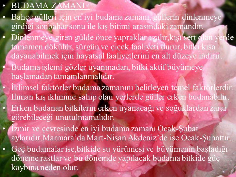 BUDAMA ZAMANI : Bahçe gülleri için en iyi budama zamanı, güllerin dinlenmeye girdiği sonbahar sonu ile kış bitimi arasındaki zamandır.
