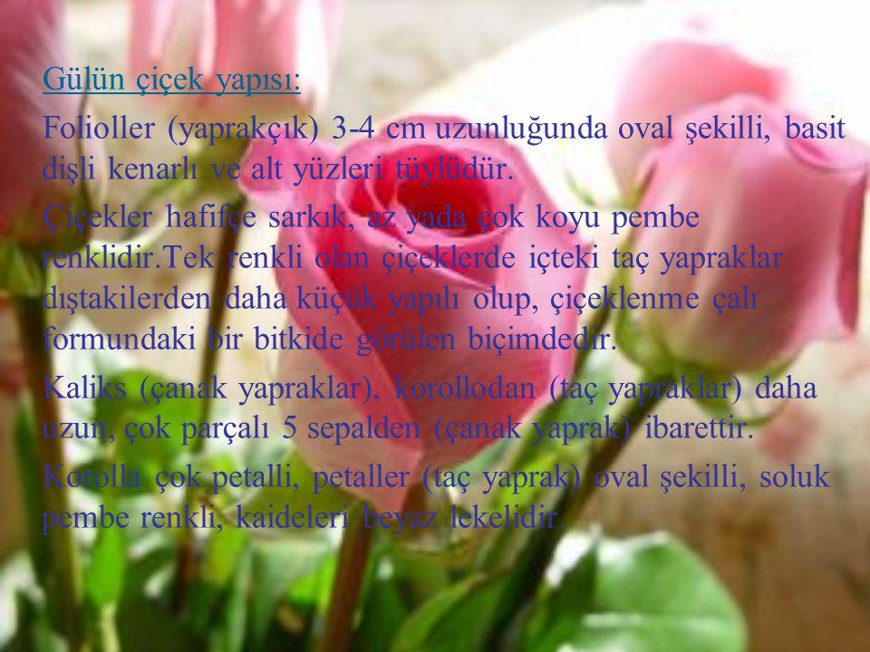 Gülün çiçek yapısı: Folioller (yaprakçık) 3-4 cm uzunluğunda oval şekilli, basit dişli kenarlı ve alt yüzleri tüylüdür.