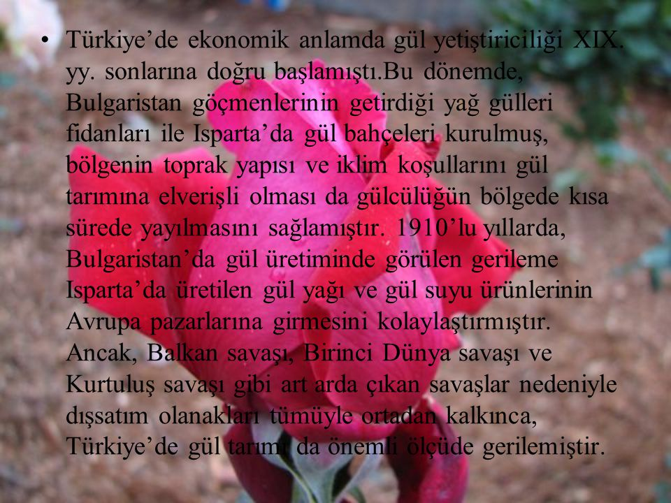 Türkiye'de ekonomik anlamda gül yetiştiriciliği XIX. yy