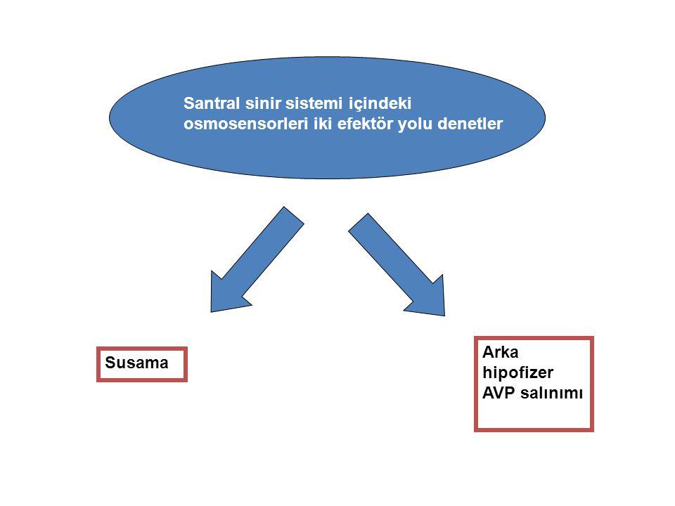 Santral sinir sistemi içindeki osmosensorleri iki efektör yolu denetler