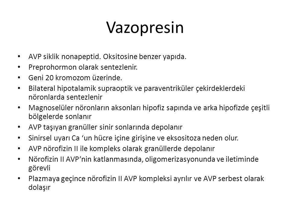 Vazopresin AVP siklik nonapeptid. Oksitosine benzer yapıda.