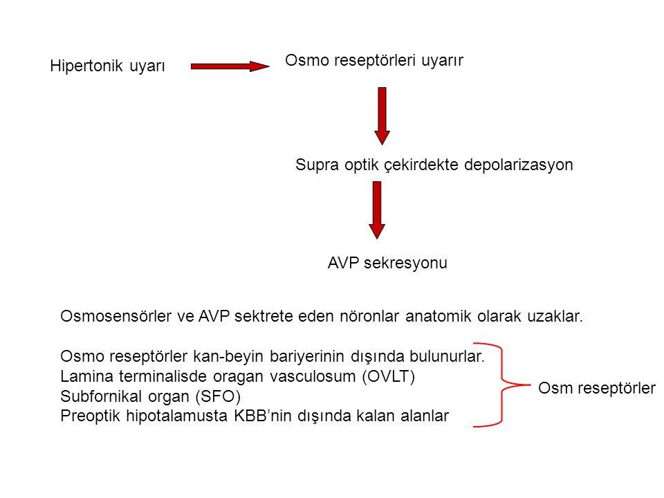 Osmo reseptörleri uyarır