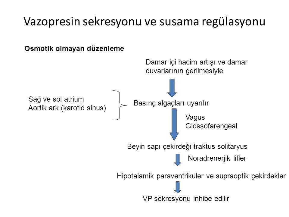 Vazopresin sekresyonu ve susama regülasyonu
