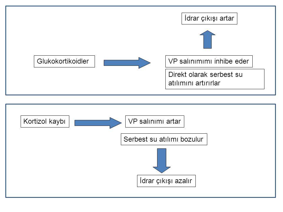 İdrar çıkışı artar Glukokortikoidler. VP salınımımı inhibe eder. Direkt olarak serbest su atılımını artırırlar.