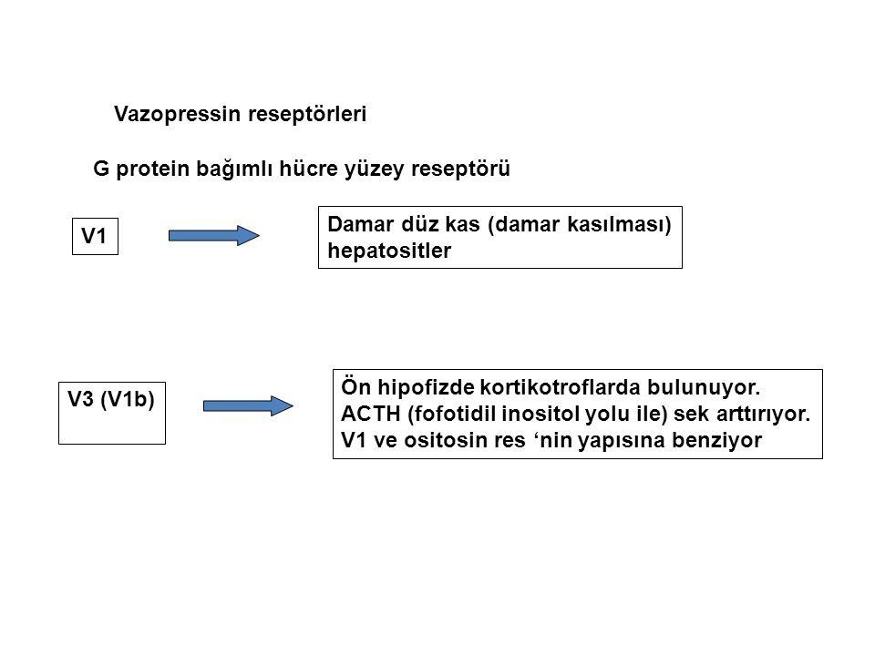 Vazopressin reseptörleri