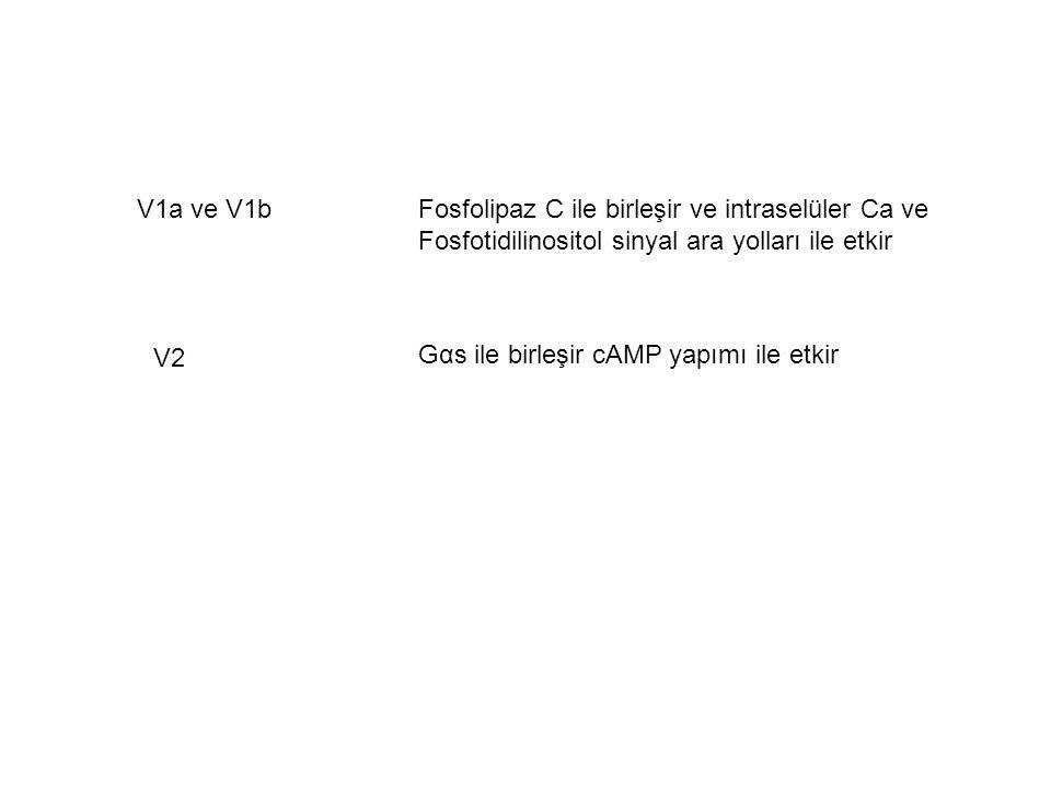 V1a ve V1b Fosfolipaz C ile birleşir ve intraselüler Ca ve. Fosfotidilinositol sinyal ara yolları ile etkir.
