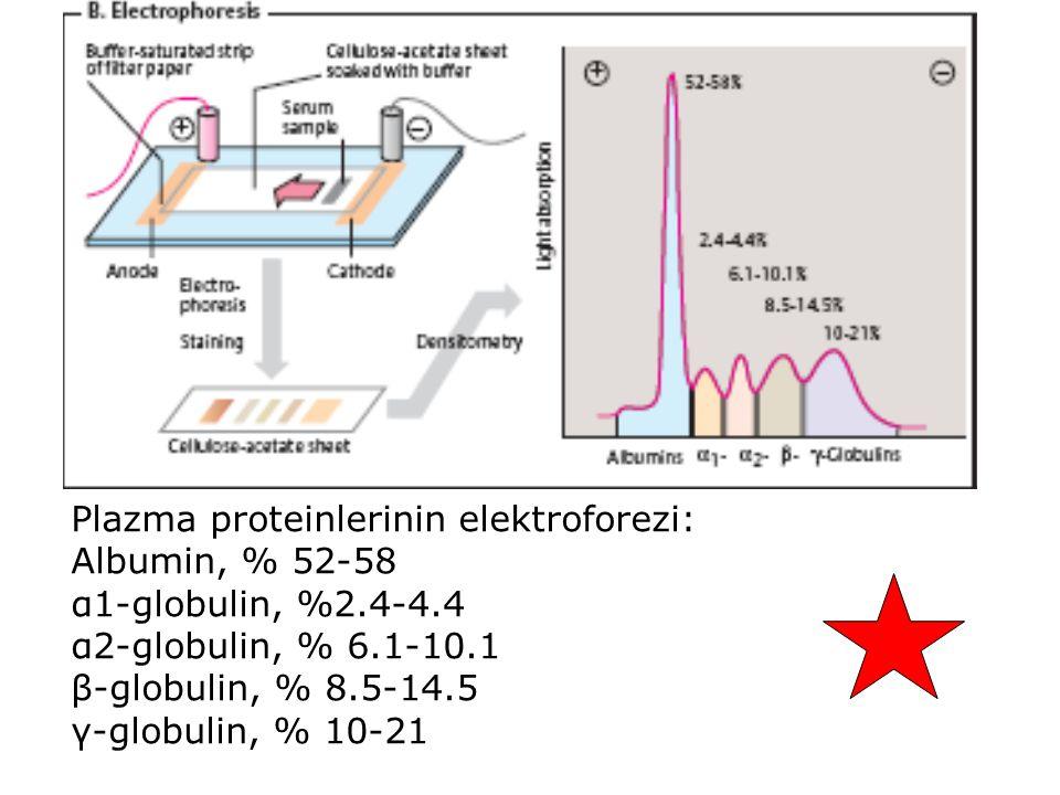 Plazma proteinlerinin elektroforezi: