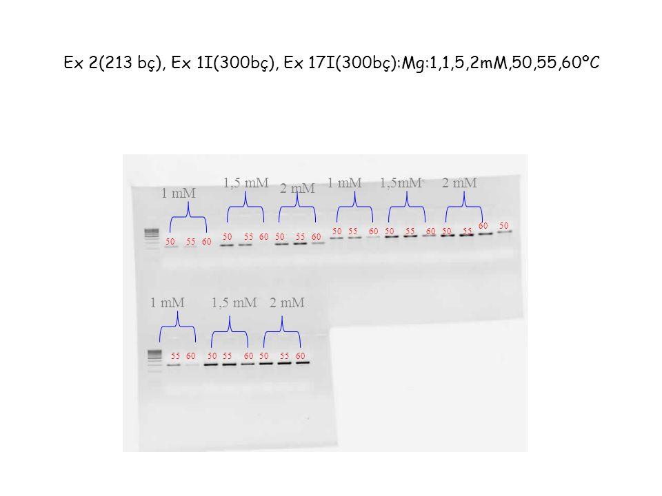 Ex 2(213 bç), Ex 1I(300bç), Ex 17I(300bç):Mg:1,1,5,2mM,50,55,60ºC