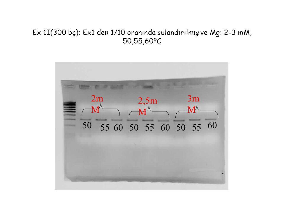 Ex 1I(300 bç): Ex1 den 1/10 oranında sulandırılmış ve Mg: 2-3 mM, 50,55,60ºC