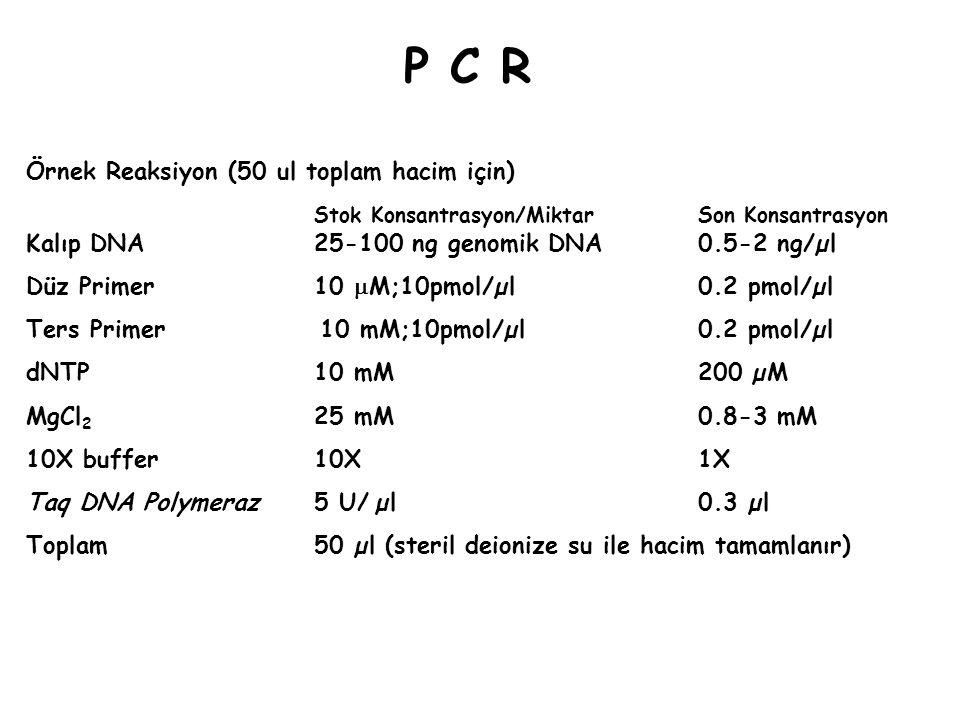 P C R Örnek Reaksiyon (50 ul toplam hacim için)