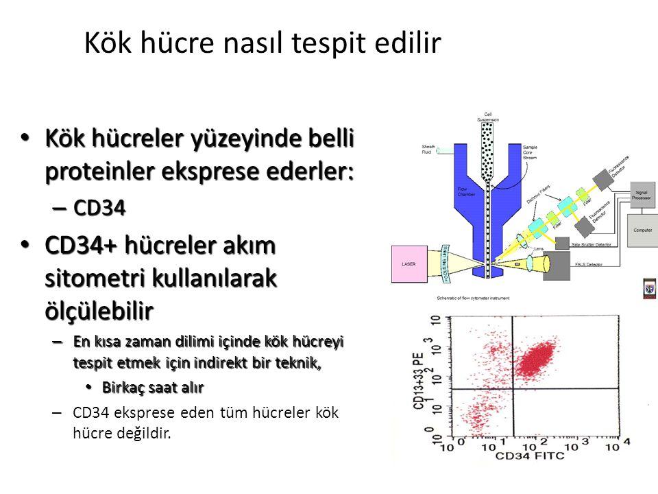 Kök hücre nasıl tespit edilir