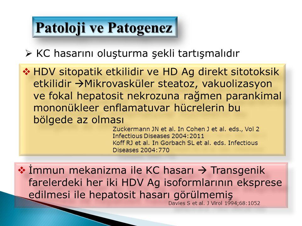 Patoloji ve Patogenez KC hasarını oluşturma şekli tartışmalıdır