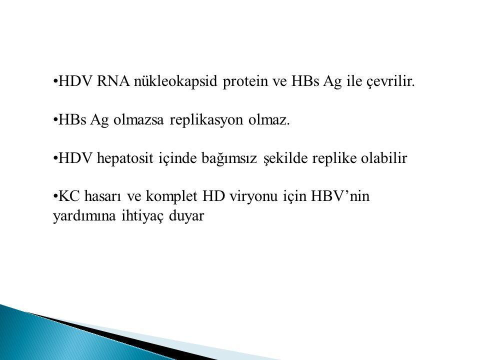 HDV RNA nükleokapsid protein ve HBs Ag ile çevrilir.