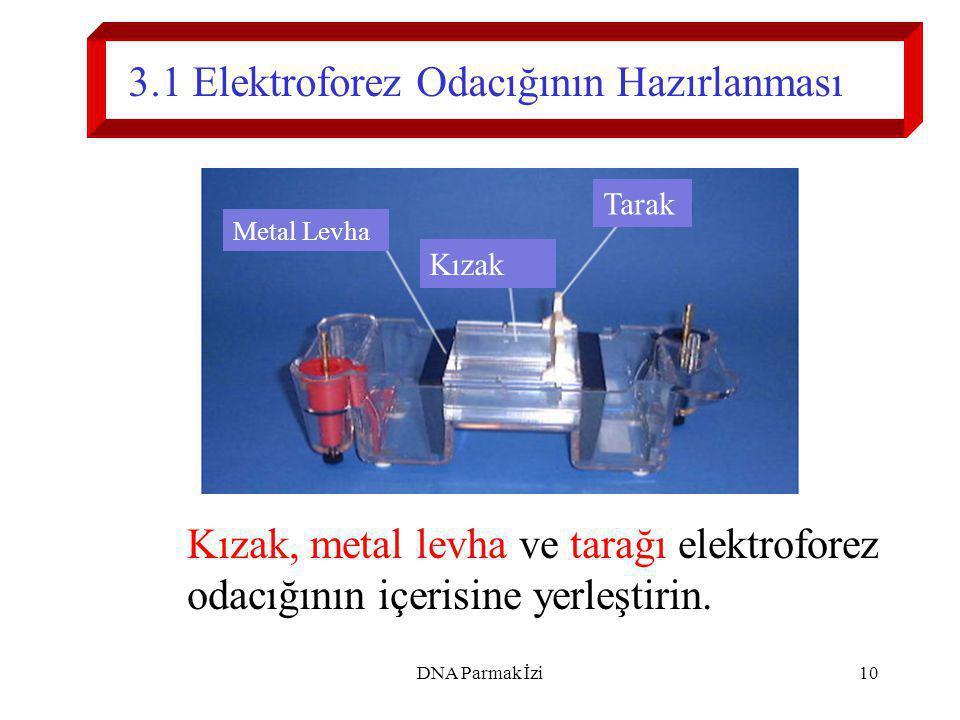 3.1 Elektroforez Odacığının Hazırlanması