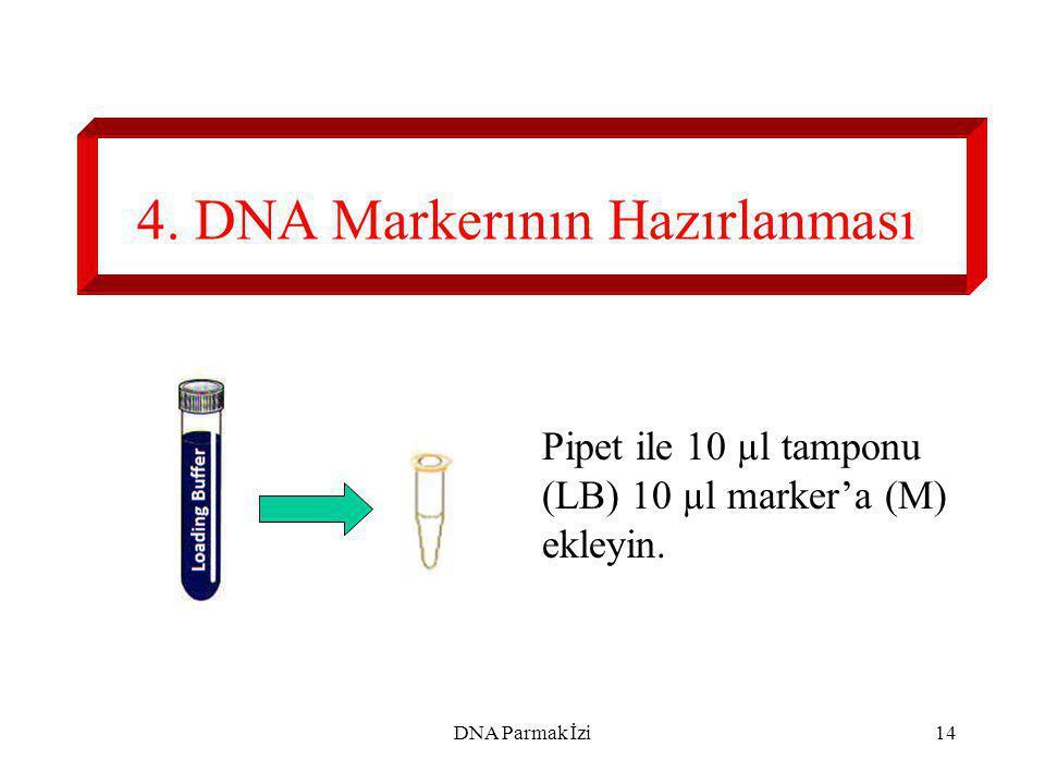 4. DNA Markerının Hazırlanması