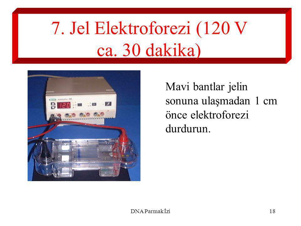 7. Jel Elektroforezi (120 V ca. 30 dakika)