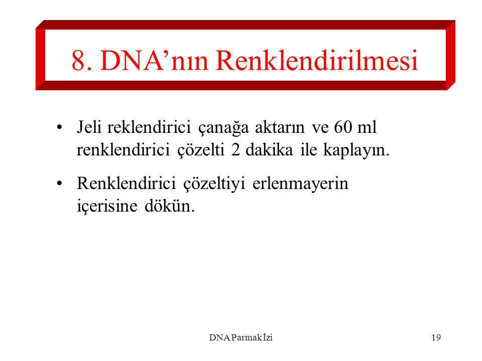 8. DNA'nın Renklendirilmesi