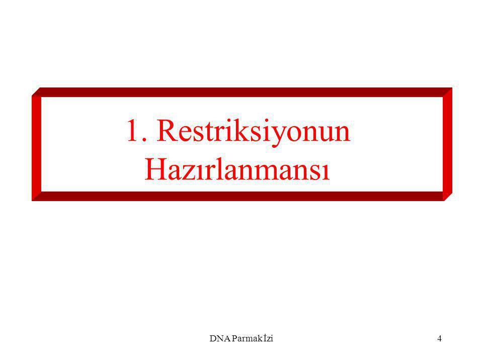 1. Restriksiyonun Hazırlanmansı