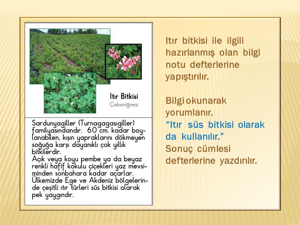 Itır bitkisi ile ilgili hazırlanmış olan bilgi notu defterlerine yapıştırılır.