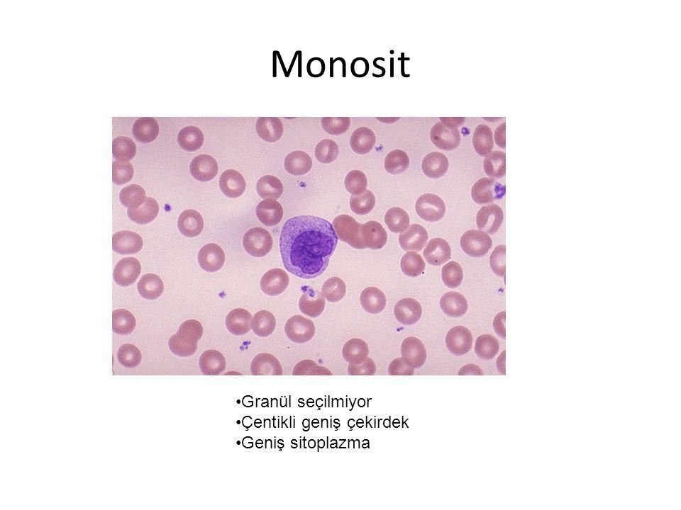 Monosit Granül seçilmiyor Çentikli geniş çekirdek Geniş sitoplazma