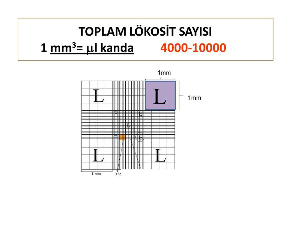 TOPLAM LÖKOSİT SAYISI 1 mm3= ml kanda 4000-10000