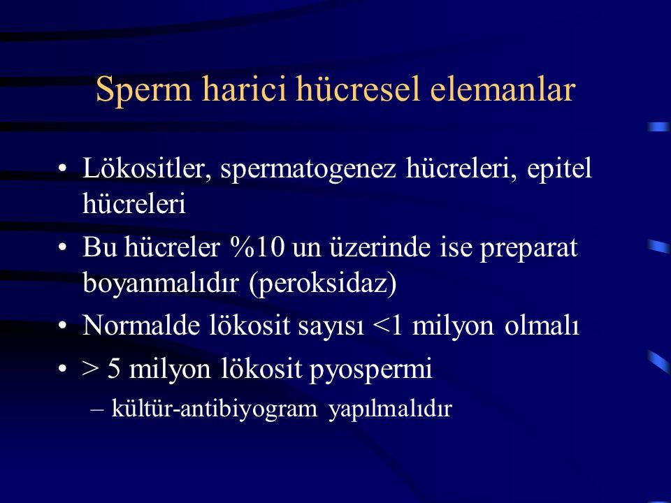 Sperm harici hücresel elemanlar