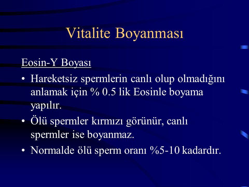 Vitalite Boyanması Eosin-Y Boyası