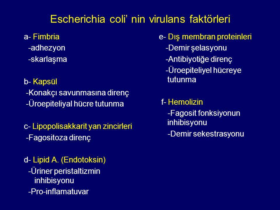 Escherichia coli' nin virulans faktörleri