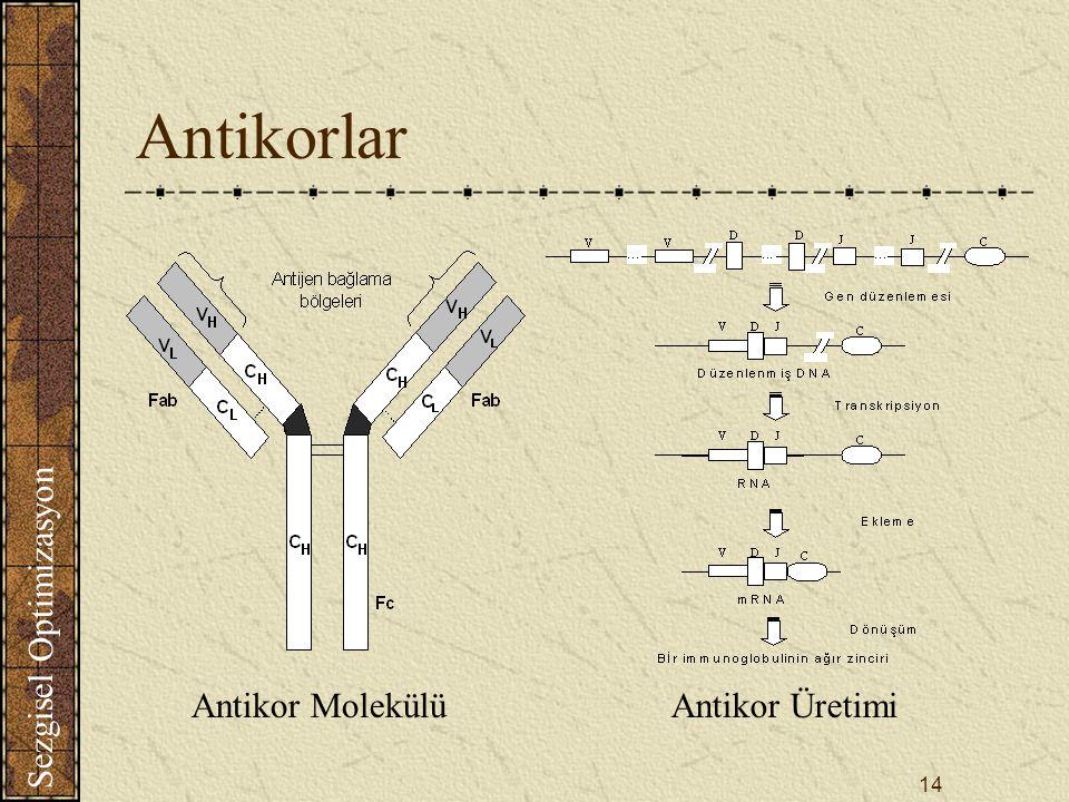Antikorlar Antikor Molekülü Antikor Üretimi