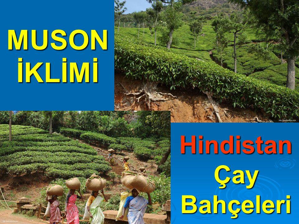 Hindistan Çay Bahçeleri