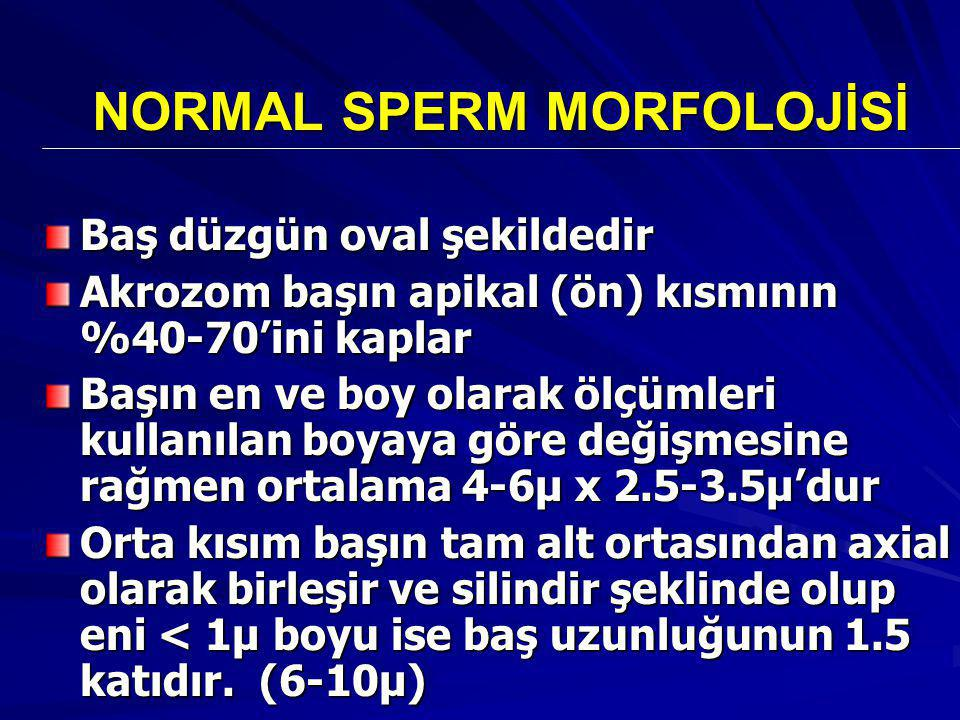 NORMAL SPERM MORFOLOJİSİ