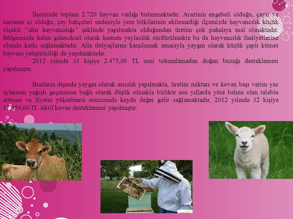 İlçemizde toplam 2. 720 hayvan varlığı bulunmaktadır