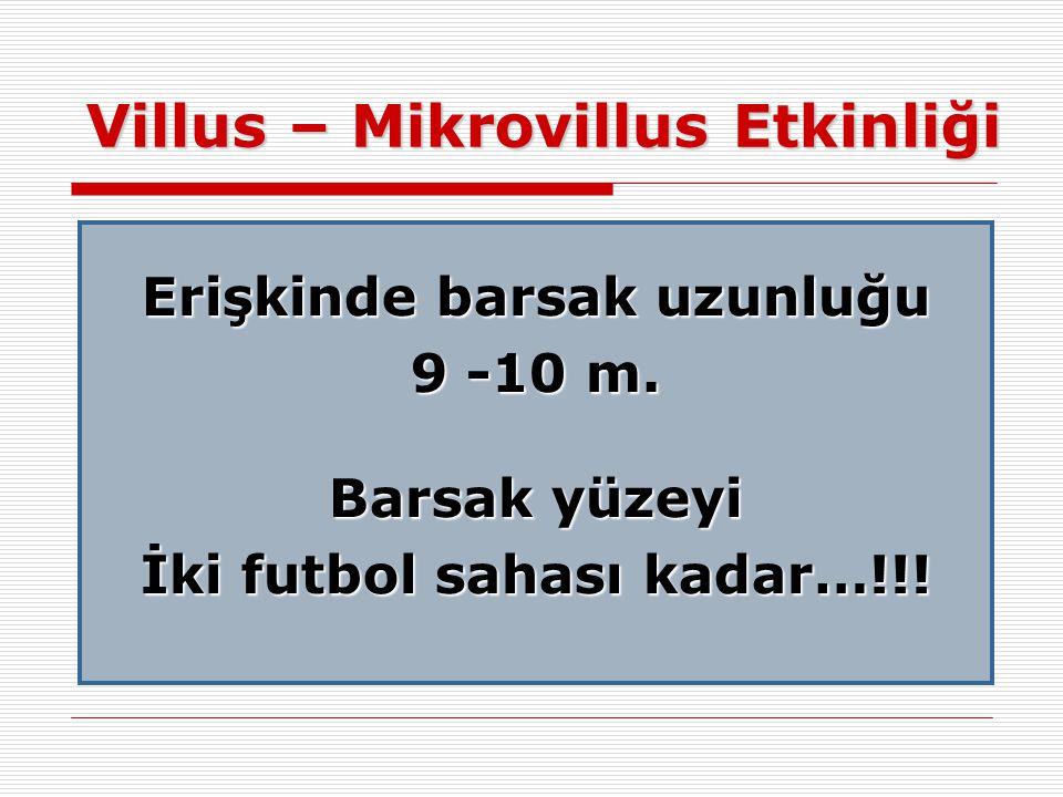 Villus – Mikrovillus Etkinliği