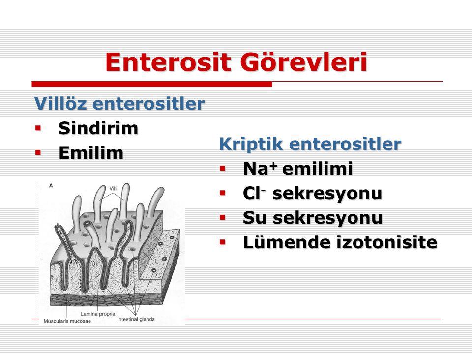 Enterosit Görevleri Villöz enterositler Sindirim Emilim