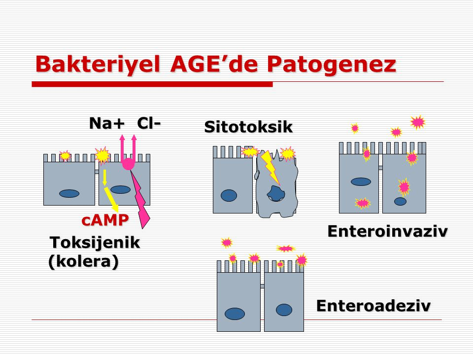 Bakteriyel AGE'de Patogenez