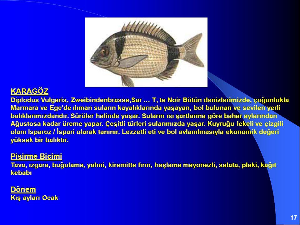 KARAGÖZ Diplodus Vulgaris, Zweibindenbrasse,Sar … T' te Noir Bütün denizlerimizde, çoğunlukla Marmara ve Ege de ılıman suların kayalıklarında yaşayan, bol bulunan ve sevilen yerli balıklarımızdandır.