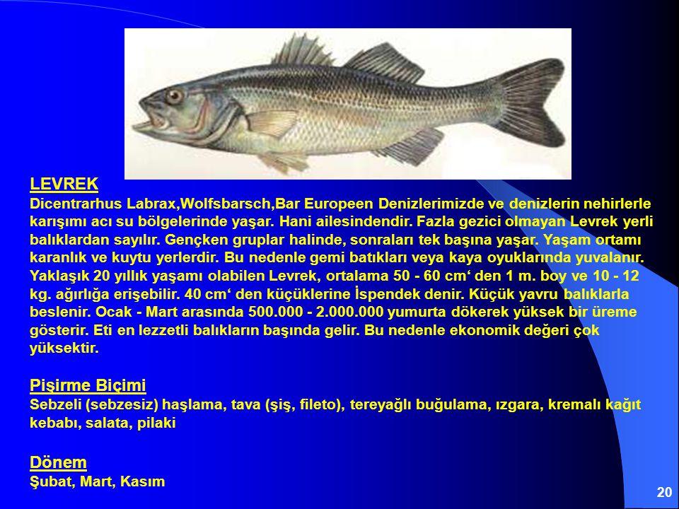 LEVREK Dicentrarhus Labrax,Wolfsbarsch,Bar Europeen Denizlerimizde ve denizlerin nehirlerle karışımı acı su bölgelerinde yaşar.