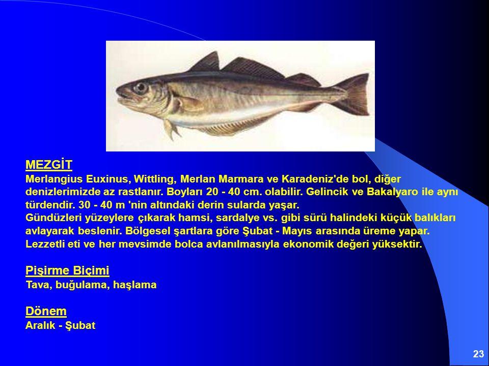 MEZGİT Merlangius Euxinus, Wittling, Merlan Marmara ve Karadeniz de bol, diğer denizlerimizde az rastlanır.
