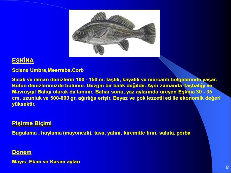 EŞKİNA Pişirme Biçimi Dönem Sciana Umbra,Meerrabe,Corb
