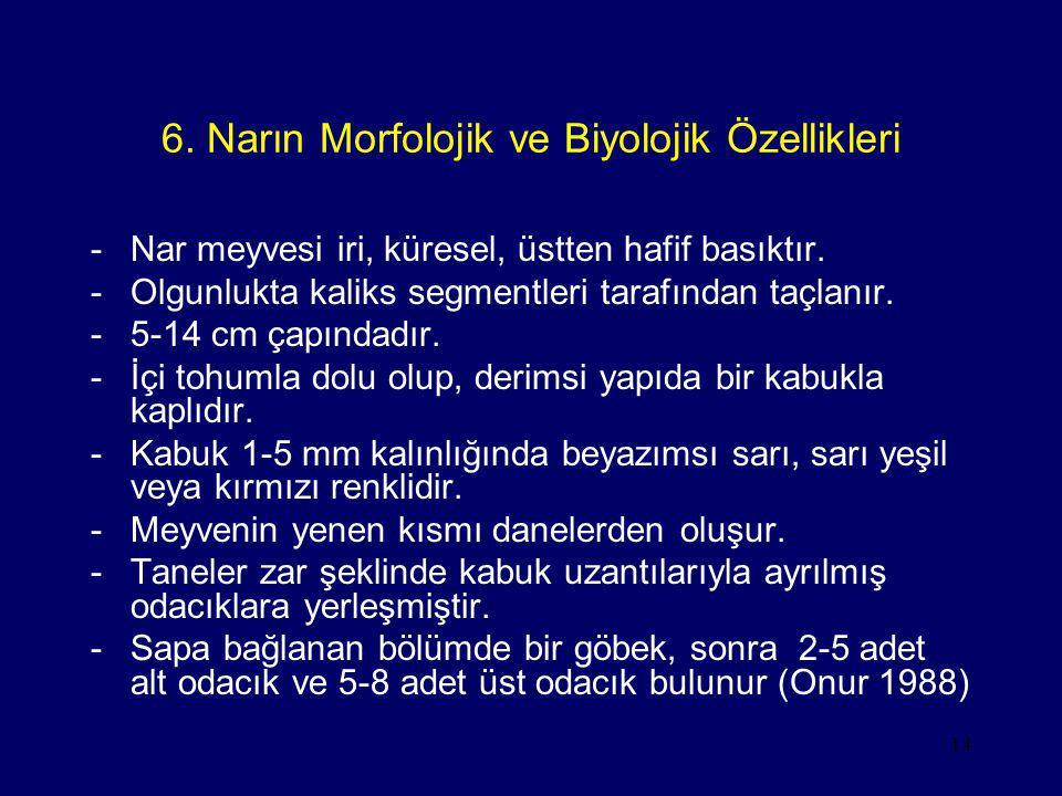6. Narın Morfolojik ve Biyolojik Özellikleri