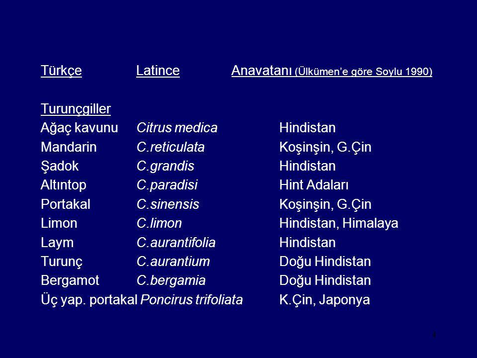 Türkçe Latince Anavatanı (Ülkümen'e göre Soylu 1990)