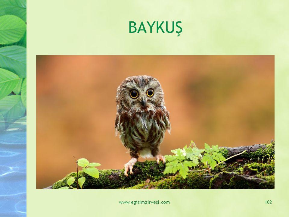 BAYKUŞ www.egitimzirvesi.com