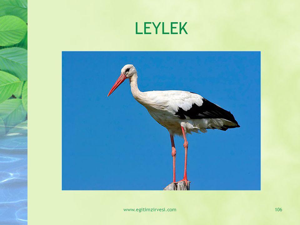 LEYLEK www.egitimzirvesi.com